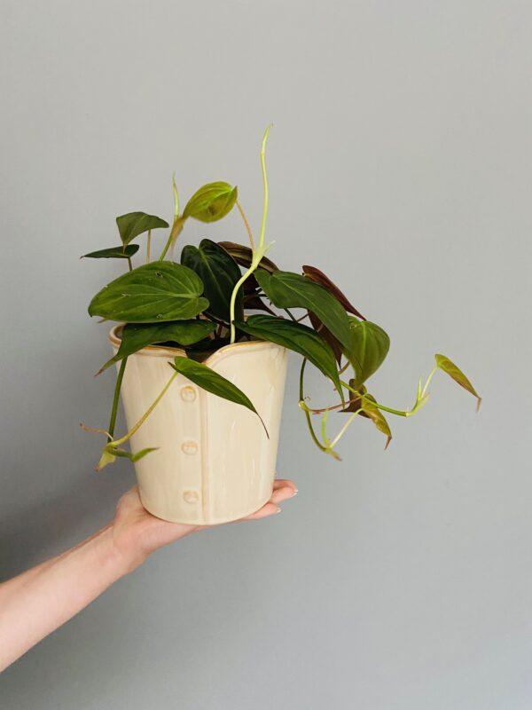 Ceramiczna osłonka w kolorze beżowym, z rośliną filodendron scandens micans