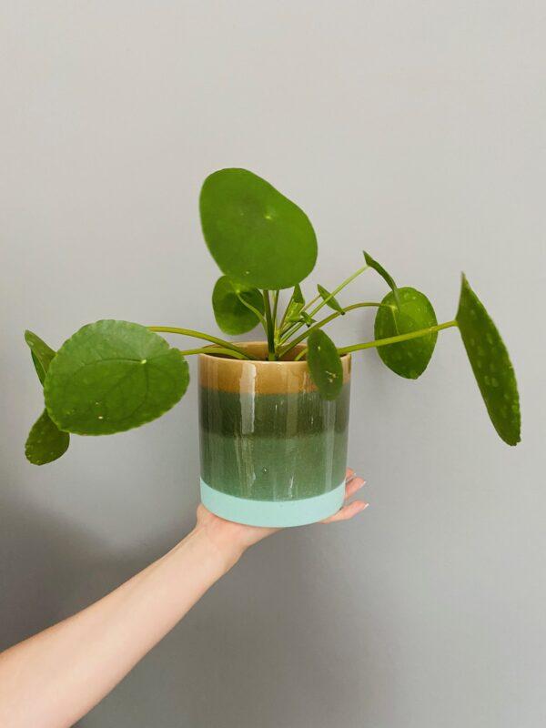 Kolorowa osłonka ceramiczna, zielono-brązowa z niebieskim spodem, Pilea peperomioides