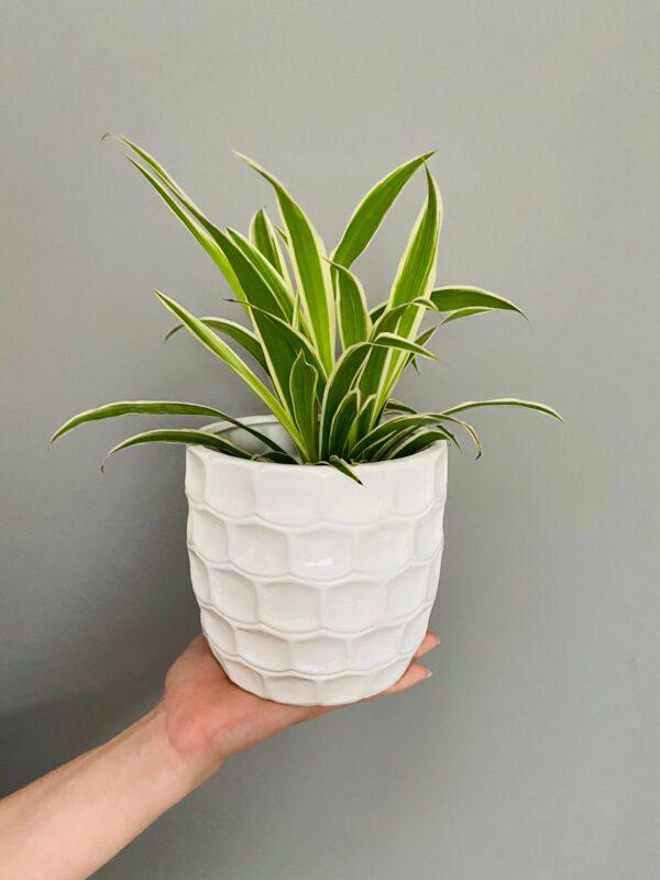 Biała ceramiczna osłonka z fakturą cegiełki, zielistka