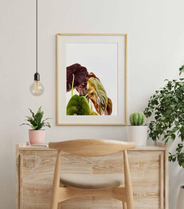 Plakat z motywem liści alokazji