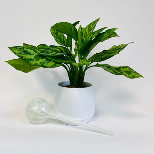 Kula nawadniająca do roślin biała