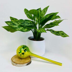 Kula nawadniająca do roślin zielona