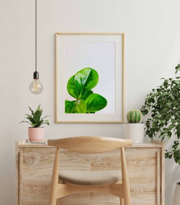 Plakat z motywem liści peperomi