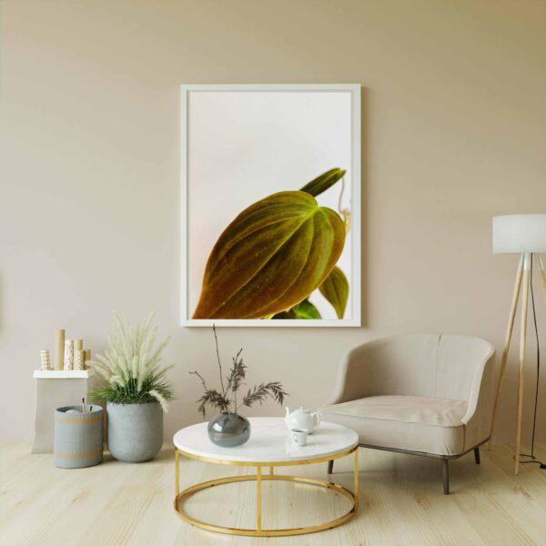 Plakat z motywem liścia filodendrona micans
